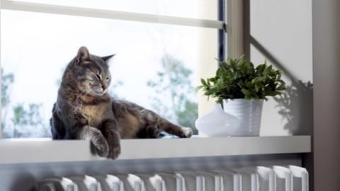 Netatmo Welcome ora distingue gli animali domestici   Applicando – Applicando