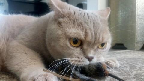 """Estate e vacanze, a chi lasciare il gatto? Professione """"cat-sitter"""" – BolognaToday"""