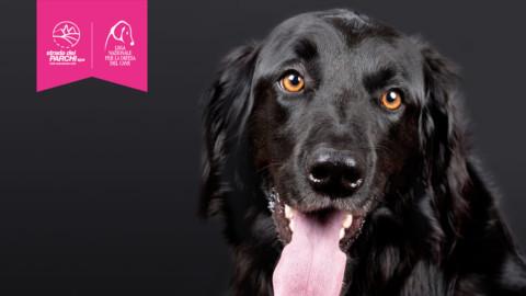 Sulle autostrade abruzzesi la campagna contro l'abbandono dei cani – Chietitoday