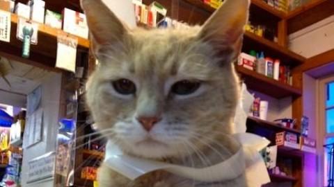 È morto Stubbs il gatto sindaco. A Talkeetna pronto il successore – Dire