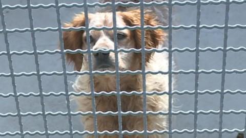 """Cani, l'Enpa contro l'abbandono. """"Attenzione alle associazioni poco … – Espansione TV"""