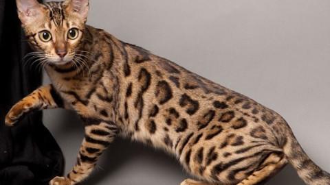 Animali: gli otto più strani – FocusJunior.it – focusjunior.it