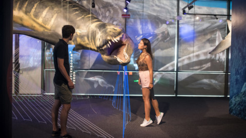"""""""Paleoaquarium, il mare al tempo dei dinosauri"""" la grande mostra all … – GenovaToday"""