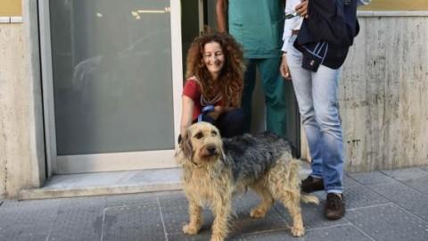 Cani nel mirino dei sadici, Rapallo si mobilita – Il Secolo XIX