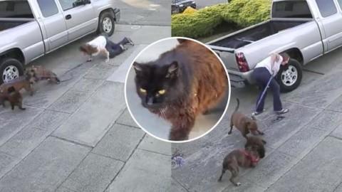 Gatto sbranato da due pitbull, quello che accade dopo vi lascerà … – Leggo.it
