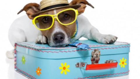 Tutto quello che devi sapere per viaggiare con il tuo animale – Meteo Web