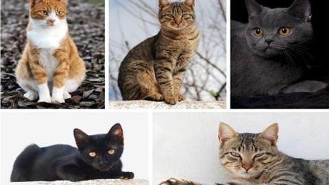 Adottare o comprare un gatto? Astenersi se… – Mondo Gatti