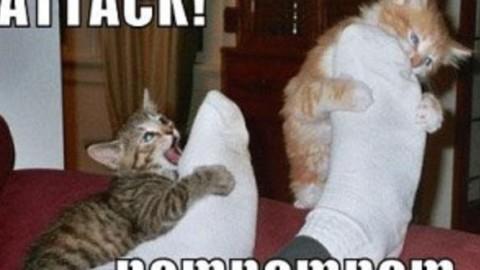 Gatto che attacca le caviglie, cosa fare – Mondo Gatti, il blog a … – Mondo Gatti