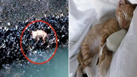 Gattino rosso caduto da un ponte: salvo grazie alle cozze – Mondo Gatti