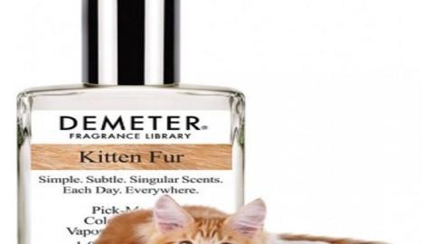 Kitten Fur, il profumo che sa di gatto – Mondo Gatti