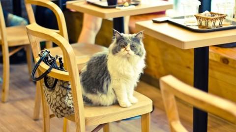 Amanti dei gatti? Non perdetevi i Cat Cafè – Palermomania.it