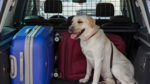 Cani in auto, come trasportarli? 8 consigli utili – Panorama Auto
