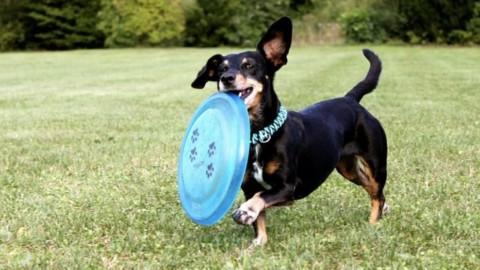 Ecco alcuni ottimi motivi per avere un cane – La Repubblica