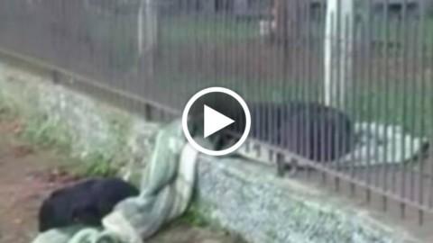 Brasile, il cane che ha emozionato il mondo: condivide la sua … – La Repubblica