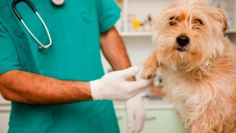 Visita dal veterinario, come aiutare il nostro amico a 4 zampe a … – Riviera24.it