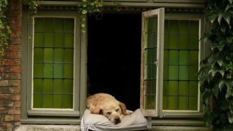 La percezione del tempo nei cani (parte 2) – Riviera24.it