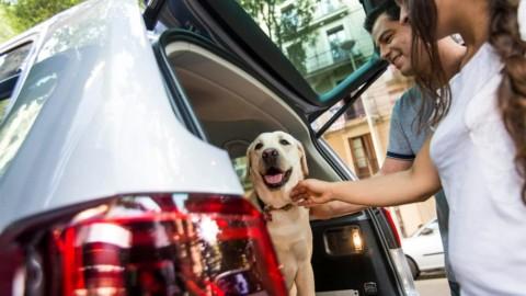Gli otto consigli di SEAT per viaggiare insieme al proprio cane – Today