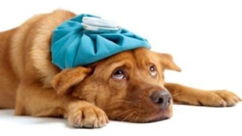 Come curare gli animali domestici in modo naturale – TuttoGreen