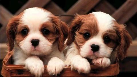 Arriva il Tribunale degli animali – Ultima Voce (Blog)