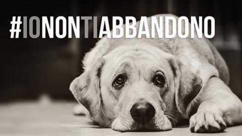 #IONONTIABBANDONO: via alla campagna di sensibilizzazione … – uomini e donne comunicazione (Satira) (Comunicati Stampa) (Registrazione) (Blog)