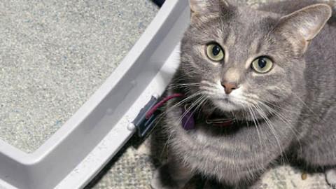 Il mio gatto e la raccolta Porta a Porta: dove metto la sua lettiera? – ValdichianaOggi.it (Satira) (Comunicati Stampa) (Blog)