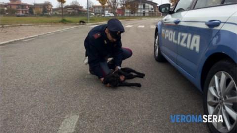 Ogni anno abbandonati 50.000 cani e 80.000 gatti, la Rete … – Verona Sera