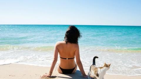 In spiaggia con il gatto, tutti i consigli utili – ViaggiNews.com