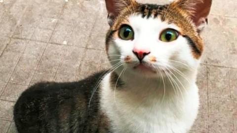 Savona, il gatto Felice cerca una casa foto – Il Vostro Giornale