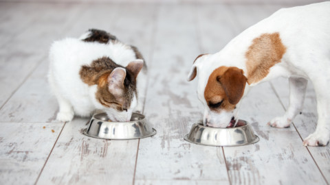 """Dieta e prevenzione dei propri animali, no """"fai da te"""" – Giornale di Treviglio (Abbonamento)"""