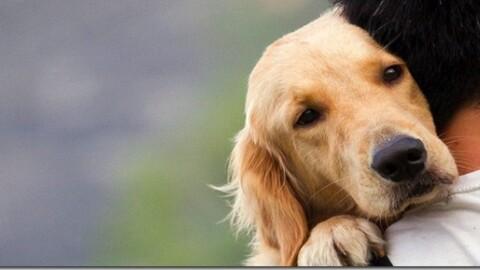 Ictus Nel Cane e Nel Gatto
