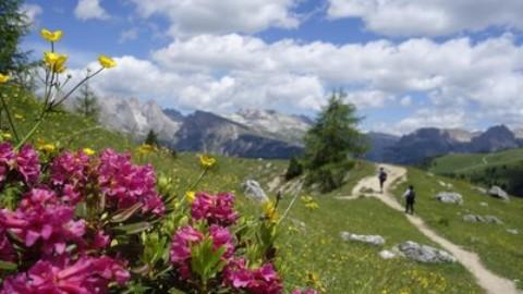 Con i nostri cani in vacanza? Ecco qualche utile consiglio – L'Eco di Bergamo (Registrazione)