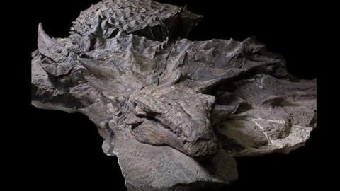Un dinosauro così non l'avete mai visto: le immagini mozzafiato del … – Scienze Fanpage