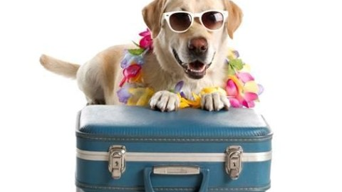 Cani e vacanze: è meglio lasciarli a casa o portarli con noi? Ecco … – AgrigentoOGGi.it