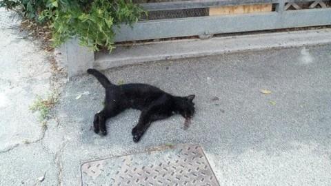 Cani e gatti morti in strada? Ecco chi chiamare e come comportarsi – CesenaToday