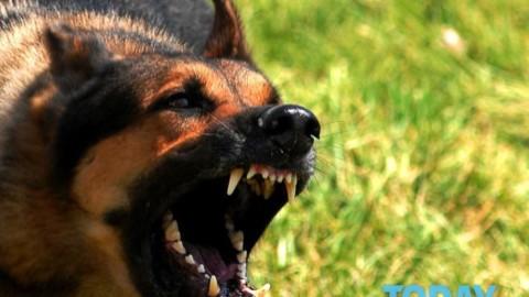 I cani scappano dal cortile e azzannano i passanti: due denunce – CesenaToday