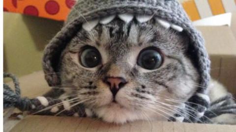 Le immagini dei gatti più famosi su Instagram – focusjunior.it