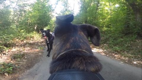 La prospettiva del cane Frisk: passeggiando sulle alture di Bolzaneto – Il Secolo XIX