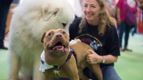 Camogli. Premio fedeltà del cane di San Rocco: due Premi bontà – Levante News