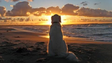 Estate, pediatra: i cani in spiaggia fanno bene ai bimbi, nessun … – Meteo Web