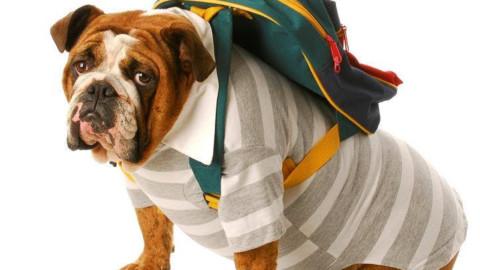 Siamo così sicuri che educare il nostro cane sia a favore del suo … – Valledaostaglocal.it
