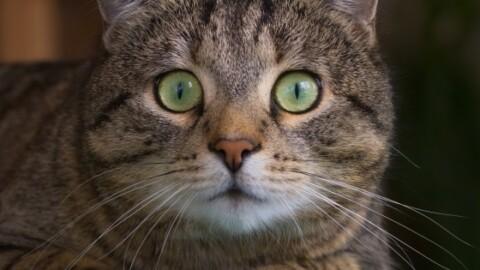 Vedova lascia in eredità 300mila dollari ai suoi gatti – 105.net