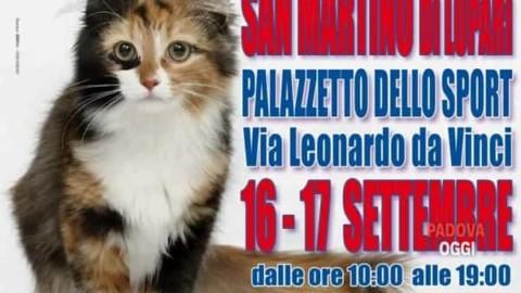 I gatti più belli del mondo e Reptilia Expo al palazzetto di San … – PadovaOggi