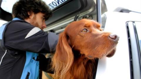 Pet detective: arriva il servizio per ritrovare cani e gatti smarriti – FoxLife