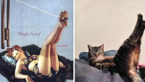 50 foto di gatti irresistibili che posano come pin-up – FoxLife