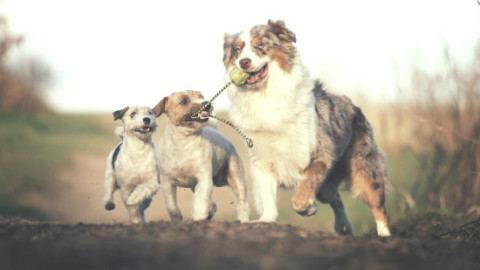 Cani e uomo, ecco i comportamenti comuni – GreenStyle