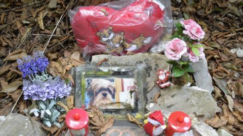 Cimitero per animali, la proposta dei Cinque Stelle – Il Nuovo Levante