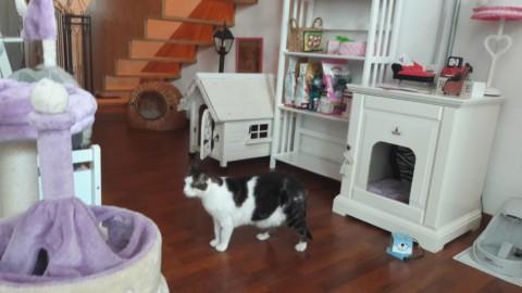 """A Milano pet therapy per bambini e """"cat-yoga"""" nel loft costruito su … – Il Sole 24 Ore"""