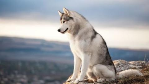 La vista dei cani – Sanihelp.it