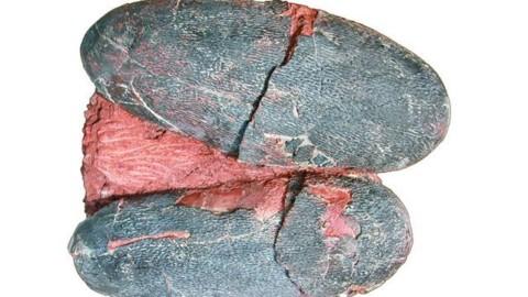 I dinosauri deponevano uova blu come gli uccelli moderni: la … – Scienze Fanpage