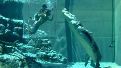 Australia, nella 'gabbia della morte' impazza il selfie con il coccodrillo – Blasting News